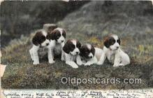 dog200203 - Spaniel Puppies Expectations Postcard Post Card