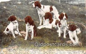 dog200206 - Ready For Sport  Postcard Post Card