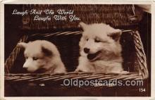 dog200224 - Postcard Post Card