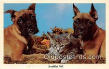 dog200227 - Doubtful Pals  Postcard Post Card
