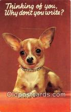 dog200238 - Chihuahua Color by Chandoha Postcard Post Card