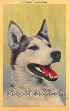 dog200248 - Anvik Alaska Husky Postcard Post Card