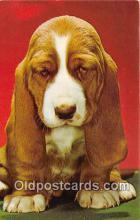 dog200249