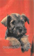 dog200251