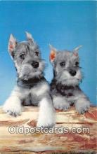 dog200257 - Schnauzer  Postcard Post Card
