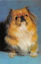 dog200258 - Postcard Post Card