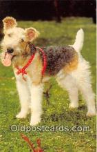 dog200263 - Wire Haired Fox Terrier Alfred Mainzer, Inc Postcard Post Card