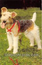 dog200263