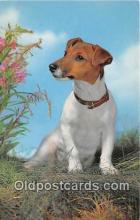 dog200268 - Jack Russel Terrier Salmon Watercolour Postcard Post Card