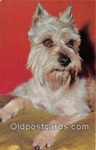 dog200269 - Schnauzer Alfred Mainzer, Inc Postcard Post Card