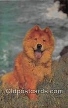 dog200274 - Chow Salmon Watercolour Postcard Post Card