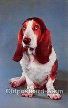 dog200275 - Basset Hounds Alfred Mainzer, Inc Postcard Post Card