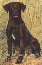 dog200280 - Postcard Post Card