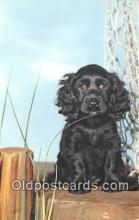 dog200281