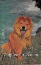 dog200285 - Chow Salmon Watercolour Postcard Post Card