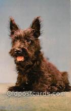 dog200289 - Scotch Terrier Alfred Mainzer, Inc Postcard Post Card