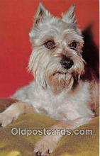 dog200291 - Schnauzer Alfred Mainzer, Inc Postcard Post Card