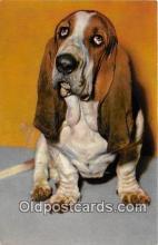 dog200293