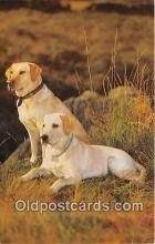 dog200305 - Yellow Labradors Salmon Watercolour Postcard Post Card