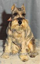 dog200307 - Schnauzer  Postcard Post Card