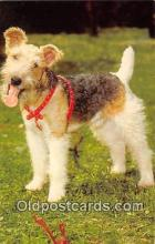 dog200308 - Wire Haired Fox Terrier  Postcard Post Card