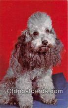 dog200323 - Poodle  Postcard Post Card