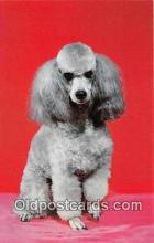 dog200324 - French Poodle  Postcard Post Card