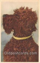 dog200330 - Poodle  Postcard Post Card