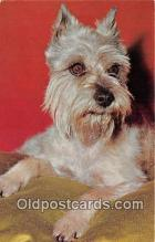 dog200331 - Schnauzer  Postcard Post Card