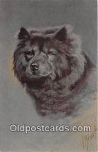 dog200342 - Chow Chow  Postcard Post Card