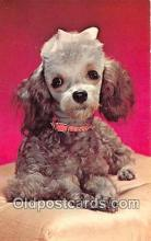 dog200345 - Poodle Royalty Color by FPG Postcard Post Card