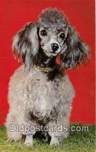 dog200346 - Poodle Color by Scenic Art, Berkely, CA, USA Postcard Post Card