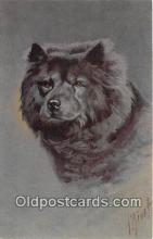 dog200349 - Chow Chow  Postcard Post Card