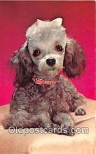 dog200350 - Poodle Royalty Color by FPG Postcard Post Card