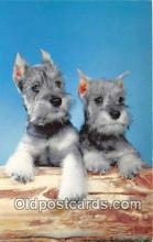dog200370 - Schnauzer  Postcard Post Card