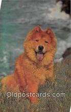 dog200393 - Chow Salmon Watercolour Postcard Post Card