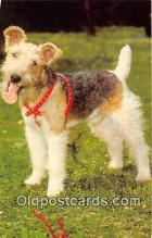 dog200394 - Wire Haired Fox Terrier  Postcard Post Card