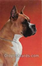 dog200395 - Boxer  Postcard Post Card