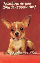 dog200397 - Chihuahua  Postcard Post Card