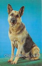 dog200406 - German Shepherd Workins Postcard Post Card
