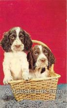 dog200410 - Little Fellers Color by Camera Clix Postcard Post Card