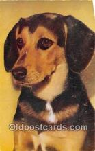 dog200411 - Beagle Queen Elizabeth Postcard Post Card