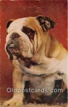 dog200413 - Bulldog Non Sportins Postcard Post Card