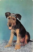 dog200416 - Sad Sack Terrier Postcard Post Card