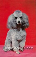 dog200426 - French Poodle Color by Scenic Art, Berkely, CA, USA Postcard Post Card