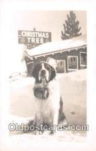 dog200428 - Christmas Tree  Postcard Post Card