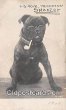 dog200431