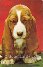 dog200432 - Tired Traveler Mike Roberts, Berkeley Postcard Post Card