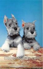 dog200433 - Schnauzer  Postcard Post Card