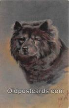 dog200442 - Chow Chow  Postcard Post Card